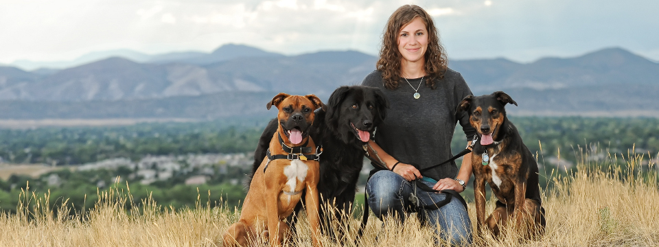 Denver's Premier Dog Training